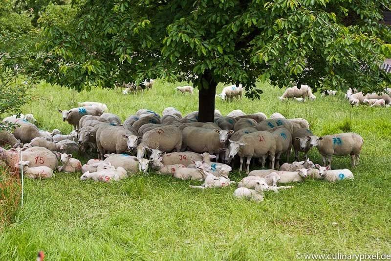 Schafe im Taubertal