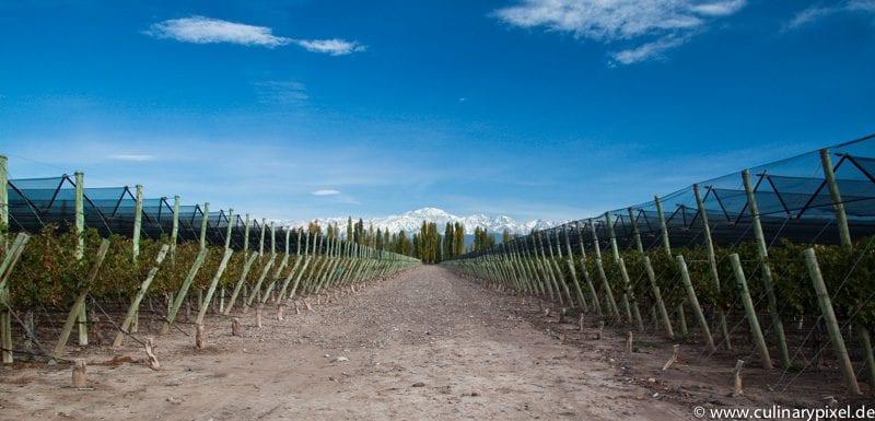 Terrazas de los Andes Weingarten Los Aromos
