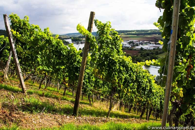 Randersacker am Main Weingut Schmitts Kinder