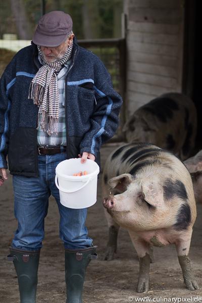 Bunte Bentheimer Schweine Falkenhof Franz Keller