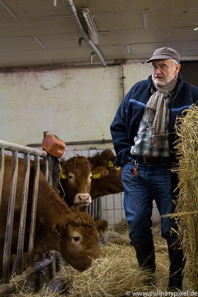 Rinder auf dem Falkenhof Franz Keller