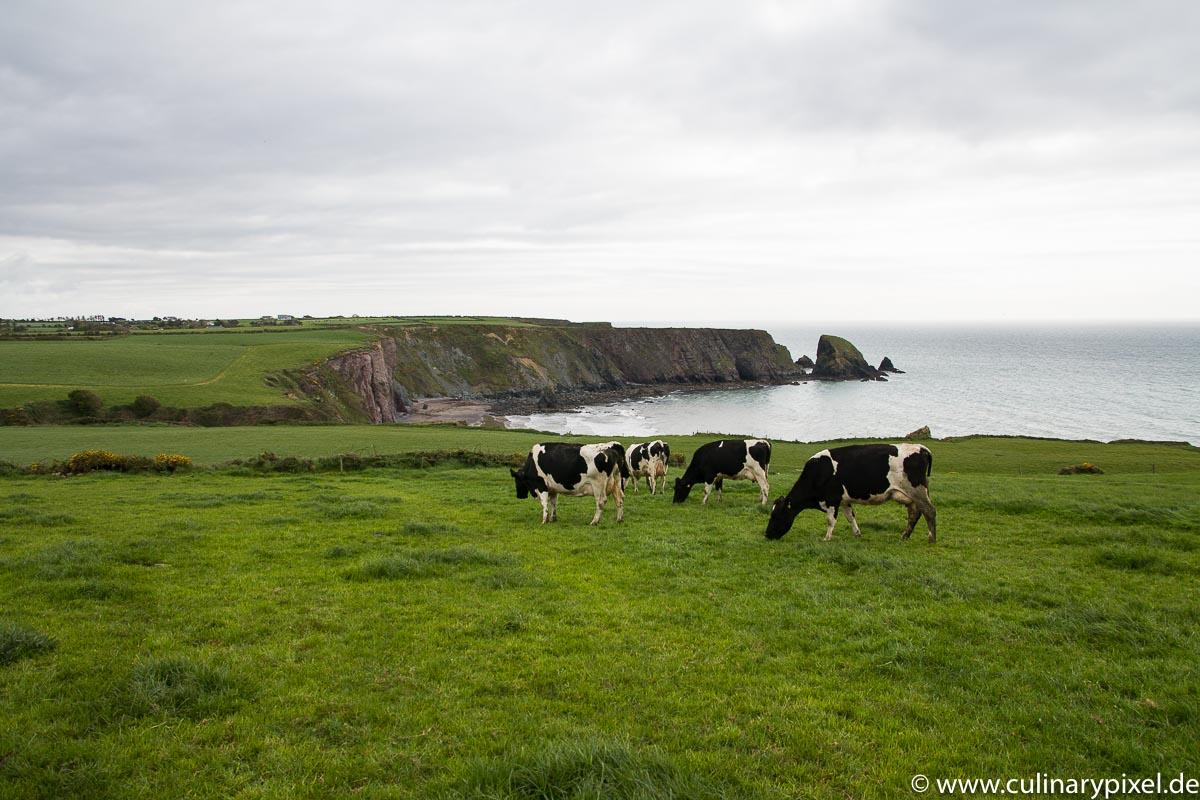 Kerrygold Kühe auf der Farm