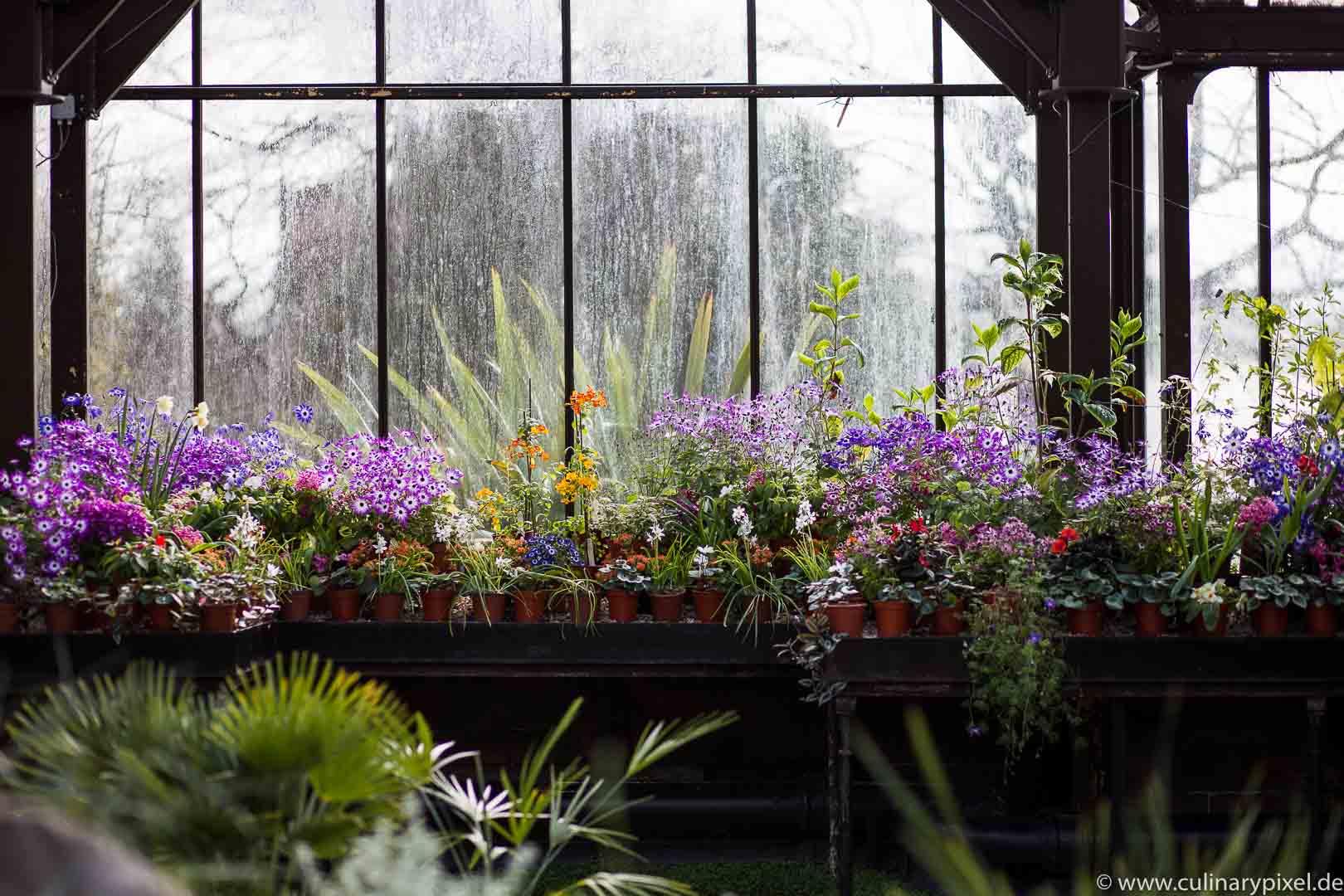 Glasgow Botanischer Garten