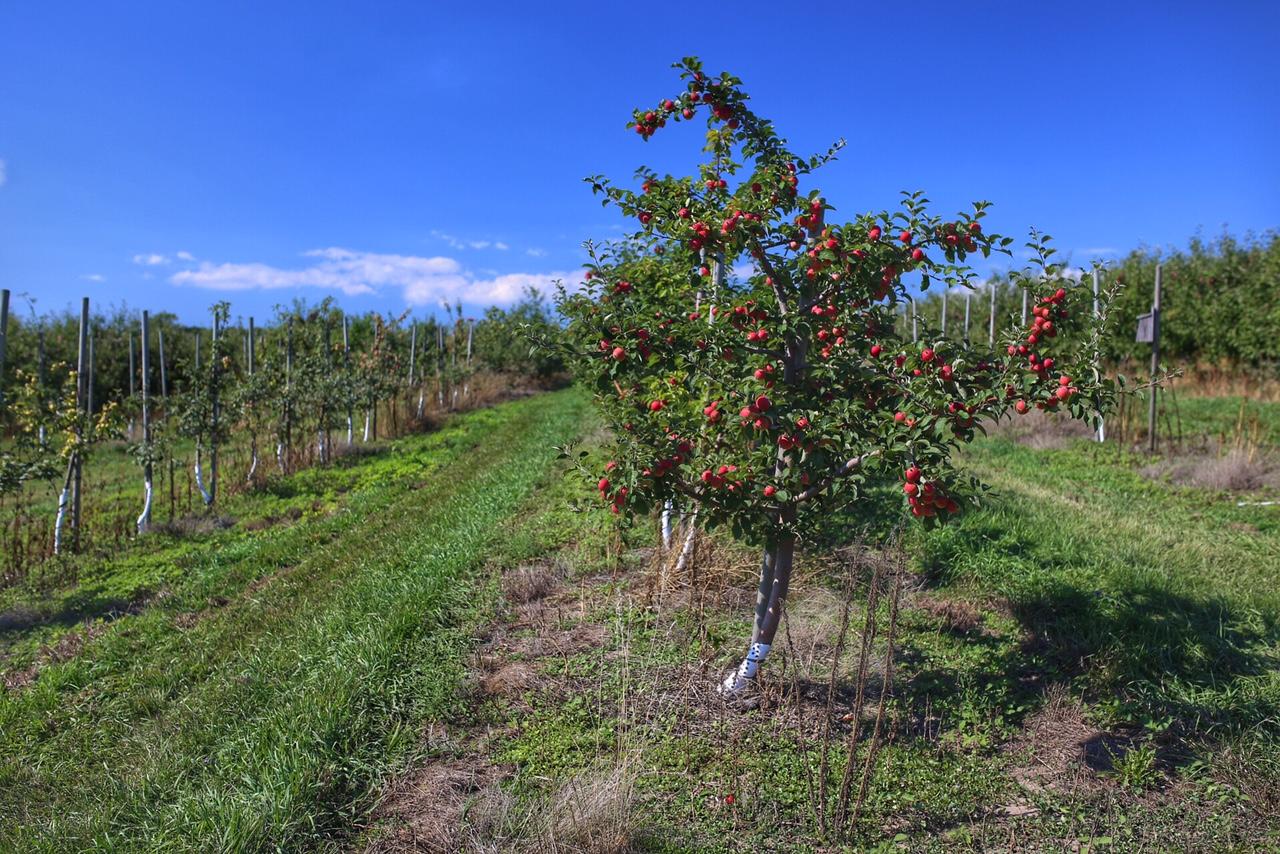 Reisetagebuch Ontario: Cider & Farm Life in Prince Edward County