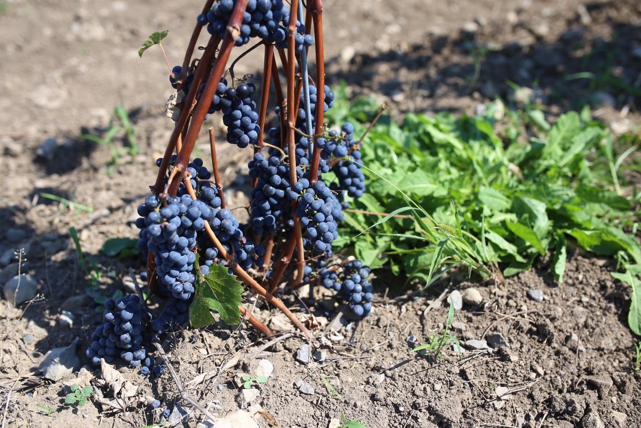 Reisetagebuch Ontario: Weingüter Prince Edward County