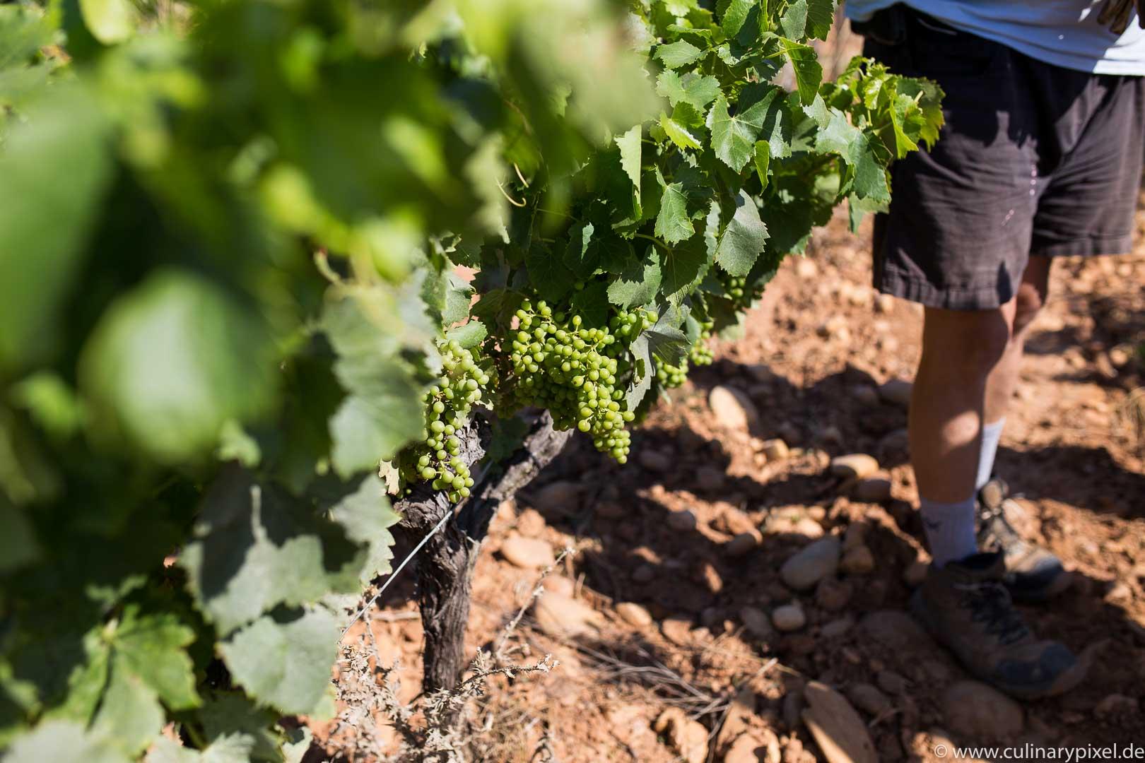 Weinregion Rhône