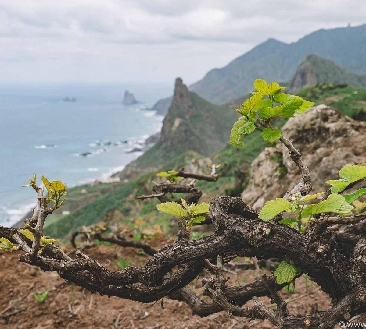 Envinate Wines, Taganana, Teneriffa